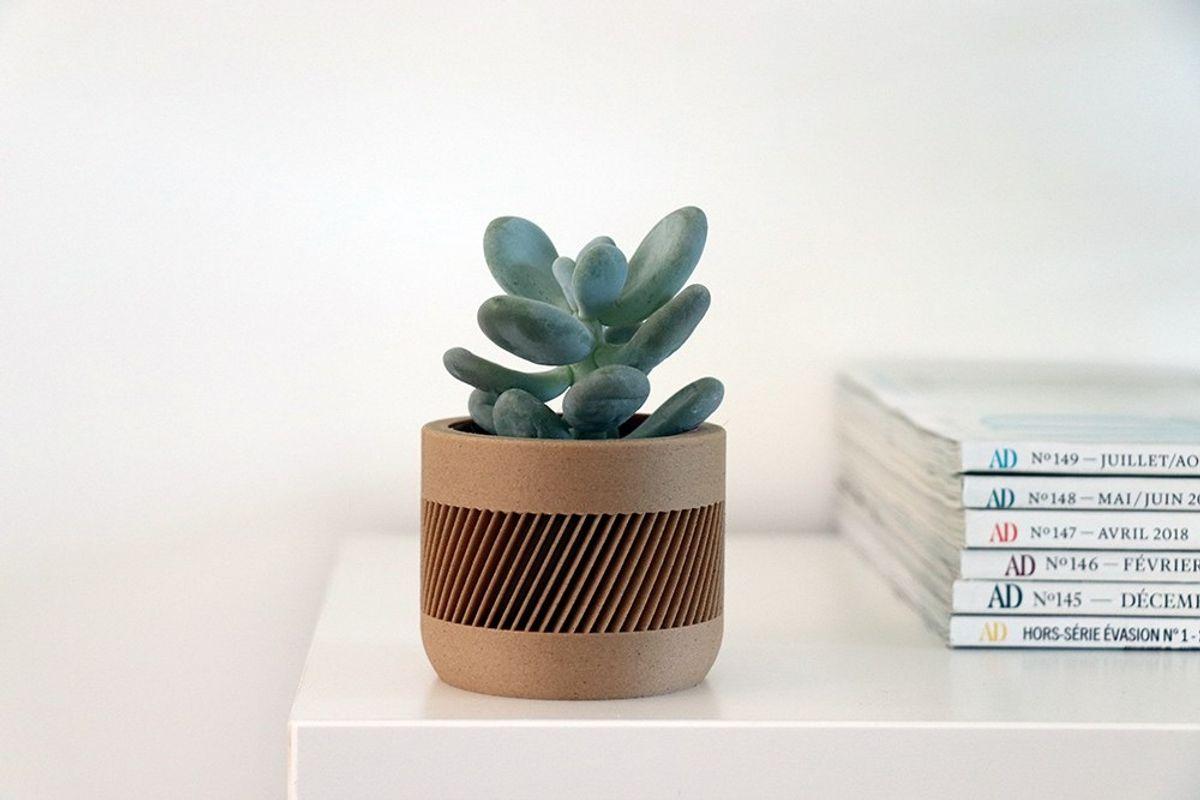 Livraison de mini plantes