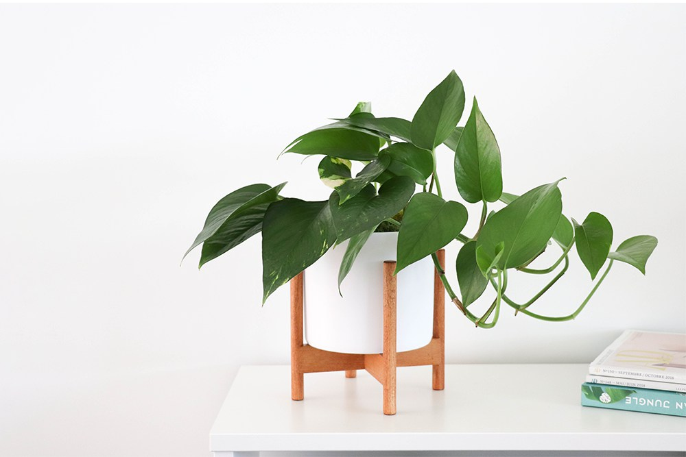 Le 15 - Velvet blanc mid-century Jatoba B