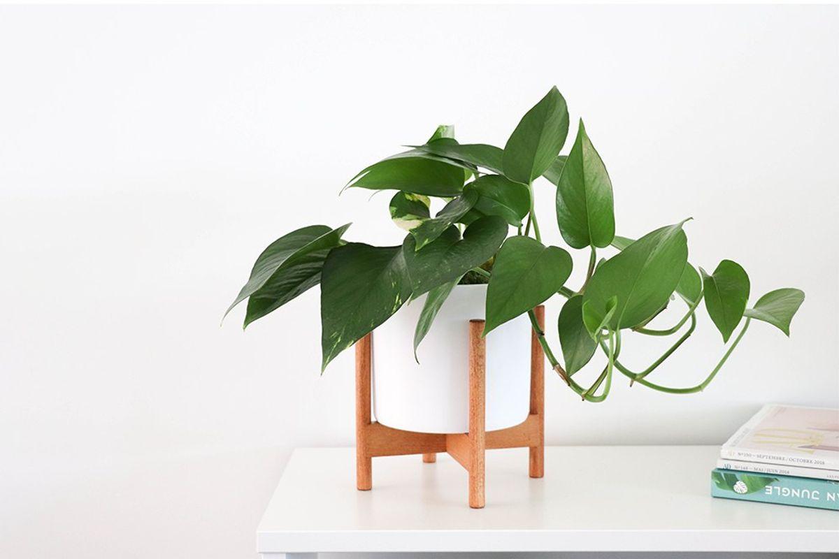 Plantes Tabletops