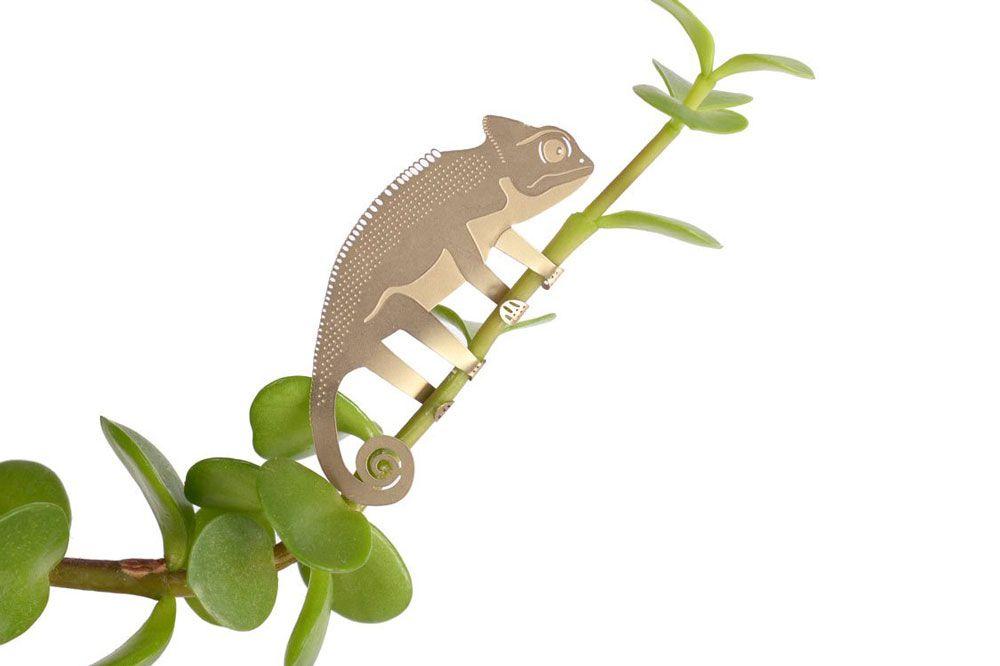 Plant Animal - Chameleon - Plant Animal - Chameleon