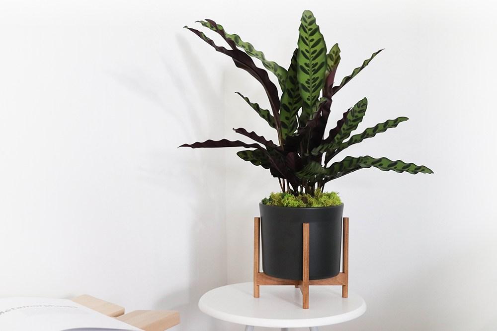 Le 20 - Velvet noir mid-century Jatoba B