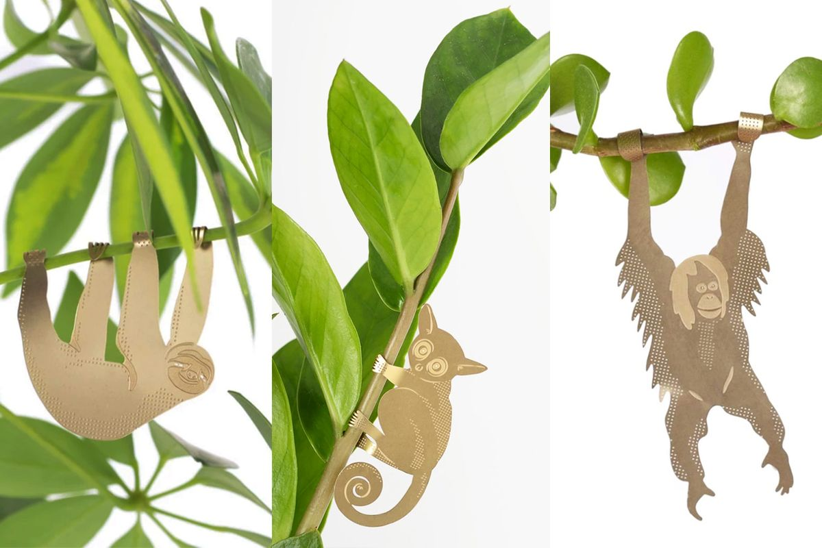 Plant Animal Trio - Plant Animal Trio