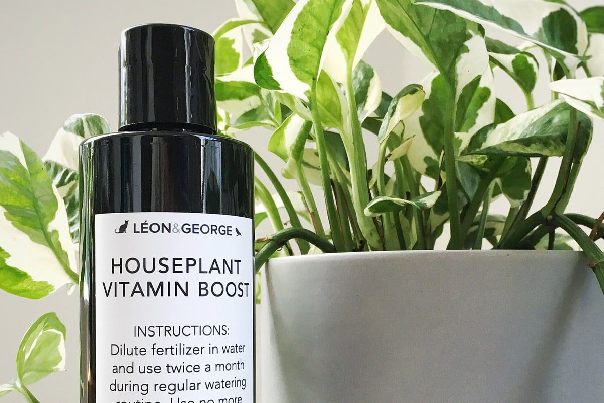Houseplant Vitamin Boost - Houseplant Vitamin Boost