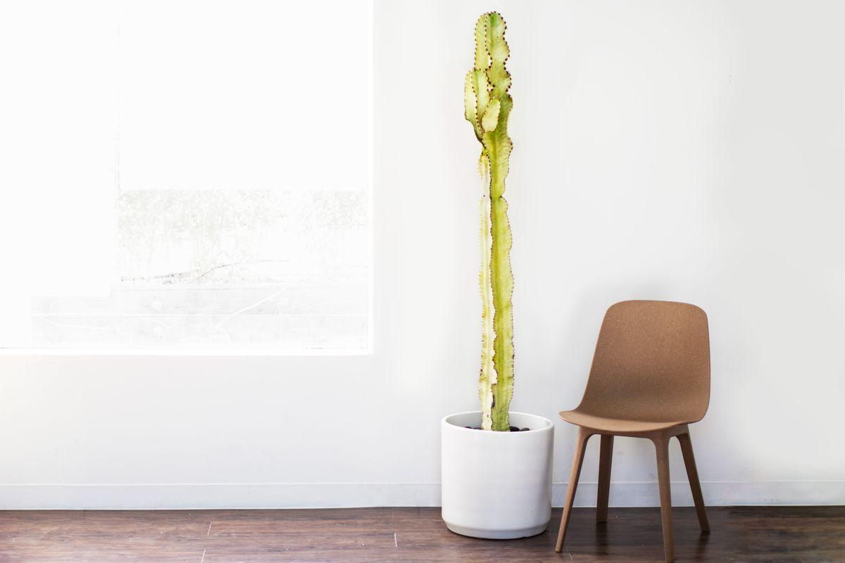 Tall Desert Cactus - Tall Desert Cactus