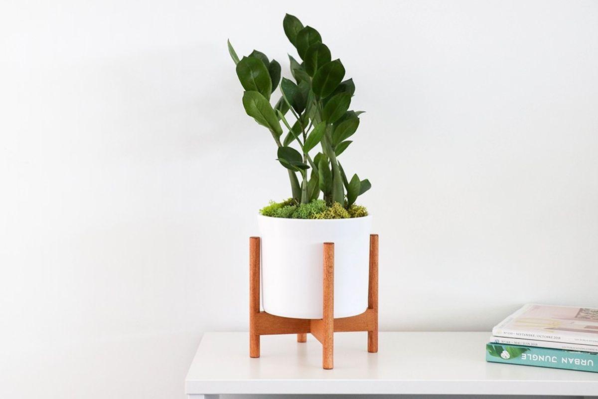 Livraison de plantes d'intérieur élégantes entre 50 et 80cm à poser sur vos tables et bureaux
