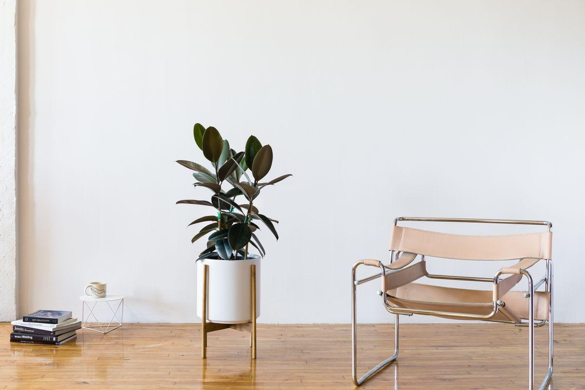 Le 32 - Velvet blanc mid-century Jatoba H